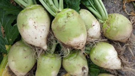 山西农村腌酸菜,不用加任何调料,石头压7天就能吃,方法超简单