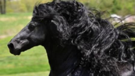 美女捡到被抛弃的小马,长大后越看越不对劲,专家:很值钱