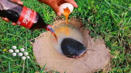 将可乐曼妥思鸭蛋,全部丢进地洞中,不料收获三条大肥鱼!