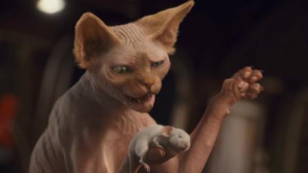 小猫咪被主人抛弃后,学着人类养老鼠当宠物,一部搞笑动物电影