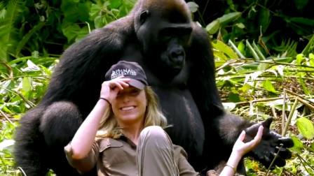 人和猩猩可以有后代吗?女科学家做大胆实验,最终得出结论