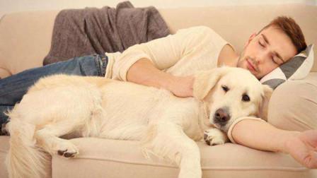 养宠物的人越来越多,那么和狗狗一起睡觉真的好吗?