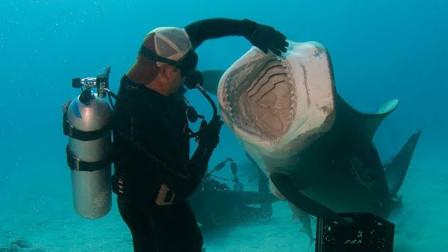 别再被电影误导了,鲨鱼就是胆小鬼,海中和人相遇,只有逃跑的份!