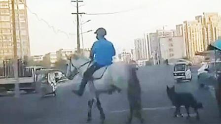 """男子骑马街头穿行身旁还有""""哮天犬""""护驾 引大量群众围观"""