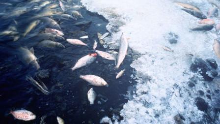 淡水鱼放入海水中, 鱼会不会死?镜头记录挣扎过程