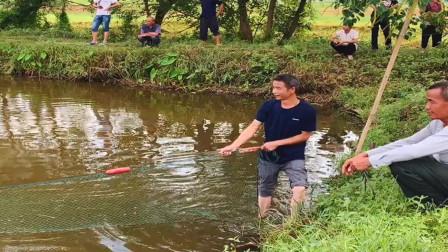 鱼塘里的鱼不知道被什么东西咬死了,农村小伙赶紧拿着网来打捞,坐等结果!
