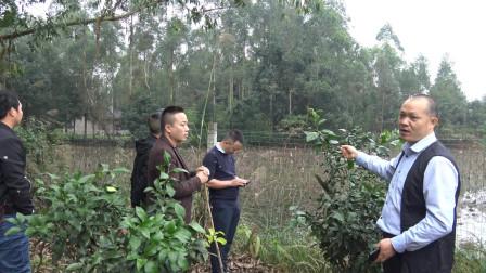 风水培训班:风水大师王君植重庆现场坟墓风水教学,如何看祖坟风水富贵大小