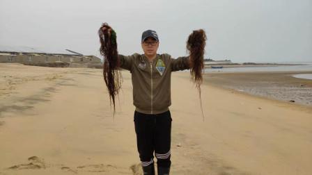 海边吹上很多龙须菜,小马用它变了一个魔术,褐色的菜瞬间变绿