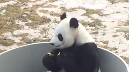 """第一时间 辽宁卫视 2019 """"喷淋 地热""""  沈阳森林动物园熊猫过""""暖冬"""""""