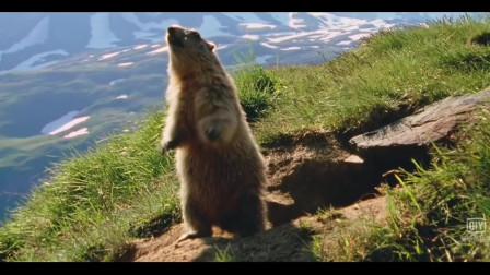 土拨鼠表情包原来是出自这部电影,《海蒂和爷爷》画面超美
