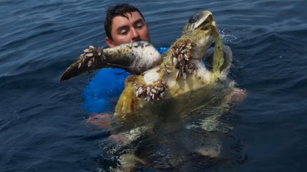 海龟主动向人类求助,画面让人心酸,人类值得反思