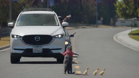 这只猫咪成精了!猫咪跟交警一样举起手拦住车,让小鸭子过马路!