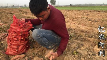 农村大哥来自己地里收红薯,媳妇孩子跟着一起帮忙,看完真心感动