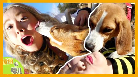 [爱丽去哪儿] 和狗狗们的可爱十连拍!冬季拔萝卜大会   爱丽去哪儿