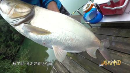 差点让这大鱼跑了,只钩到一点嘴皮,太刺激了!