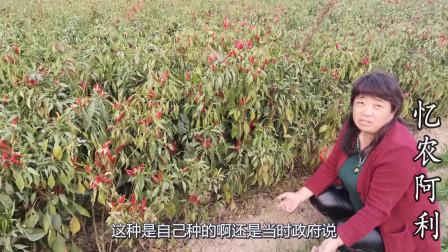 农村49岁大娘种辣椒,从7毛涨到6块一斤,可高兴不起来怎么回事?
