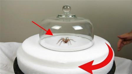 男子大玩求证实验,转盘不停看着都头晕,蜘蛛:我会怕这个?