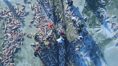 查干湖的鱼越捞越多?渔民纷纷前往投诉,都是他们搞的鬼