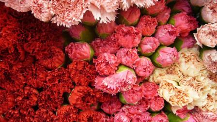 康乃馨,象征健康。你还知道哪些花语嘛?
