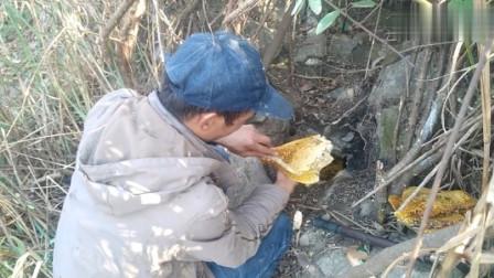 """农村小伙进山找蜂蜜有绝招,不到10分钟,""""黄金蜂巢""""就被缴获!"""