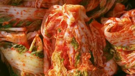 家里收获了很多白菜,腌成辣泡菜,天天吃都不会腻