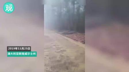 澳大利亚山火迎来大雨 消防员不禁欢呼雀跃