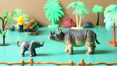 玩具动物模特赛开始啦看看你喜欢哪只动物吧.mp4