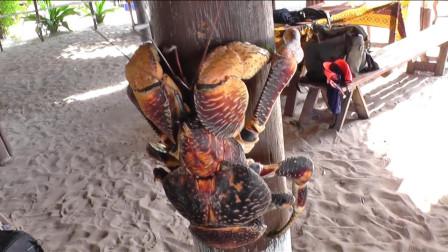 世界上最大的螃蟹,蟹钳能轻松夹碎椰子,比大闸蟹还好吃