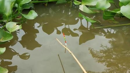 鱼漂黑漂了,鱼竿也被大鱼扯下水了,钓鱼的农村小伙这是睡着了吗?