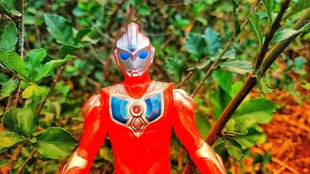 奥特曼玩具视频:为何奥特曼都喜欢去森林里?他们准备干什么