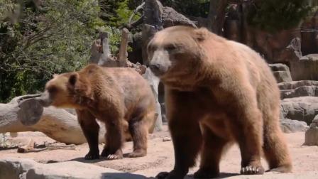 认识动物学英文第一课:神奇竹筐的动物聚会.mp4