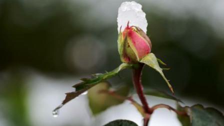 北京明天有望喜提今冬初雪 影响周五晚高峰