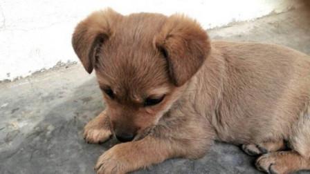 刚出生就被遗弃的小土狗,只能在角落里瑟瑟发抖,看完心疼哭了