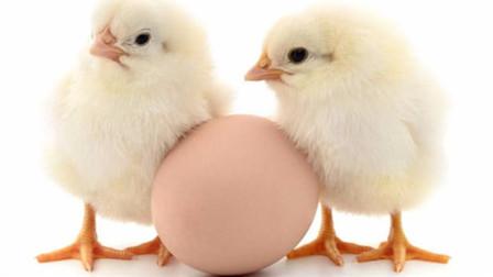 先有鸡还是先有蛋?6.1亿年前化石给出答案:先有蛋
