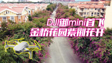 金桥花园紫荆花开,大疆御mini首飞拍摄