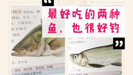 只要你会选饵,其实这两种国内最好吃的淡水鱼,非常好钓