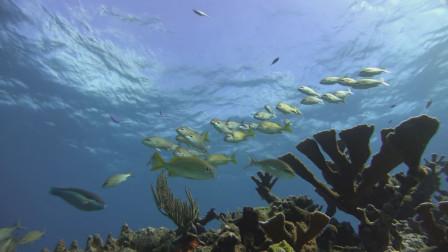 海水都变成淡水,人类能活多久?
