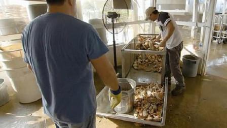 国外蟹肉都是人工取出来,工人会偷吃吗?厂长:看他们身材就知道