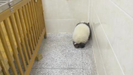熊团子闯进工作室,一听到奶妈进来,立马躲到墙角装看不见