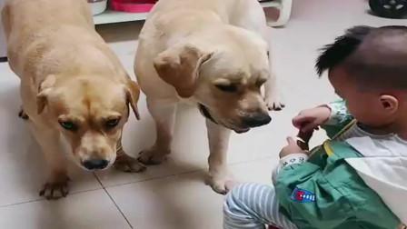 卡卡和多多看着粗鲁,其实吃的时候不会咬到宝宝的手,逗