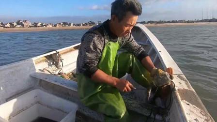 赶海大叔带了几百个玻璃罐出海抓章鱼,收获了几十只大章鱼,发财了