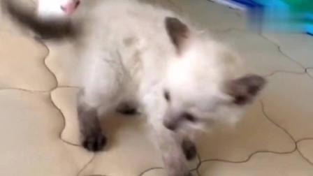 大猫抱着人家的宝宝洗脸,这是有多想当妈妈了