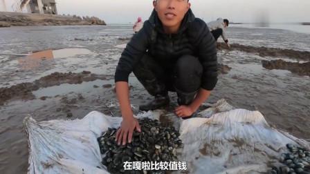 """小伙带上新发明的""""赶海神器""""来海边挖文蛤,一会功夫就收获了几十斤"""