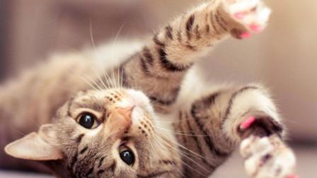 沉迷吸猫的科学证据来了!原来一切,都是喵星人的陷阱!
