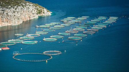 为什么四大渔场都是在寒冷海域,而热带海域却没有?今天长见识了