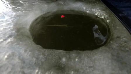 冰钓大鲫鱼,躲在帐篷里,这就是最舒服的事了