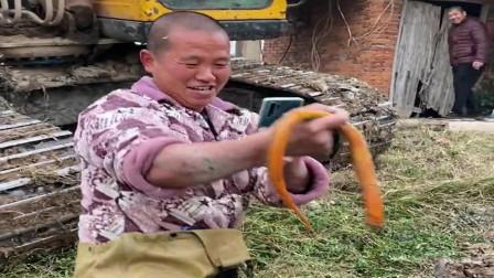 农村人的想法真大胆,请挖掘机来挖黄鳝,真是大材小用啊!