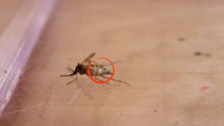 把蚊子放进真空箱里,一段时间后再拿出来,接下来一幕傻眼了