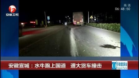 安徽宣城:水牛跑上国道 遭大货车撞击 超级新闻场 20191202 超清版