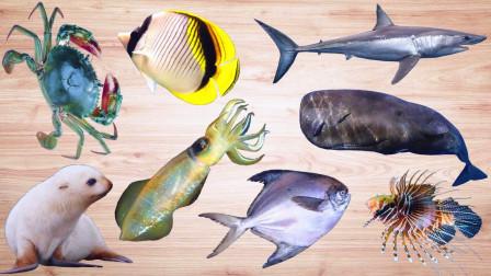 认识仙鱼等8种海洋动物,小马识动物
